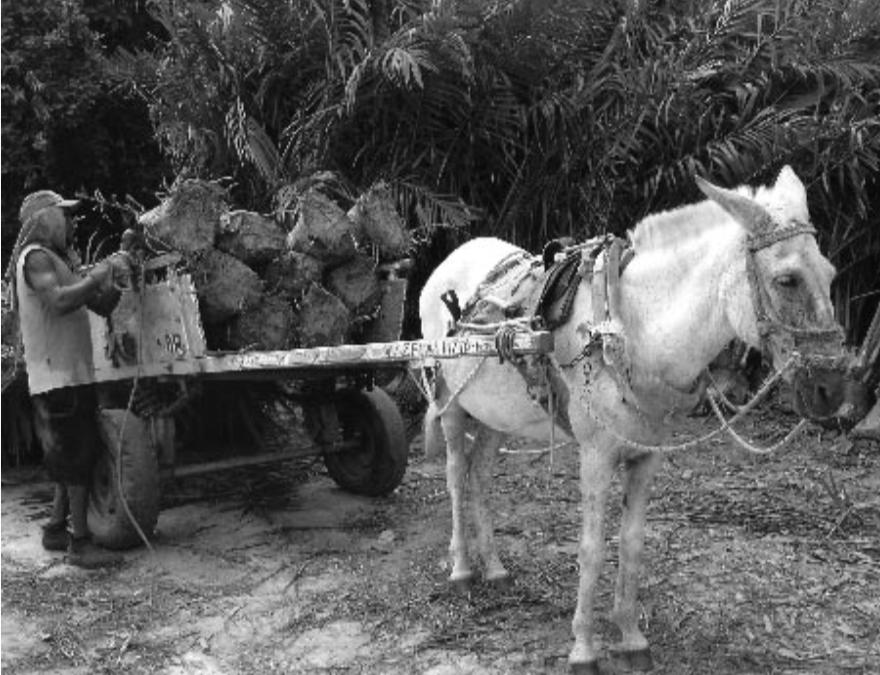 Dendê Oil Family Agriculture Project