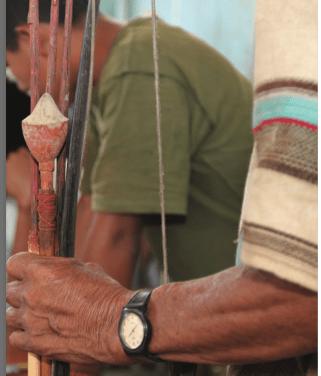 An Andean Puma Reaches Out