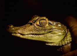 Sensual Women, Lush Wetlands and Cool Caimans