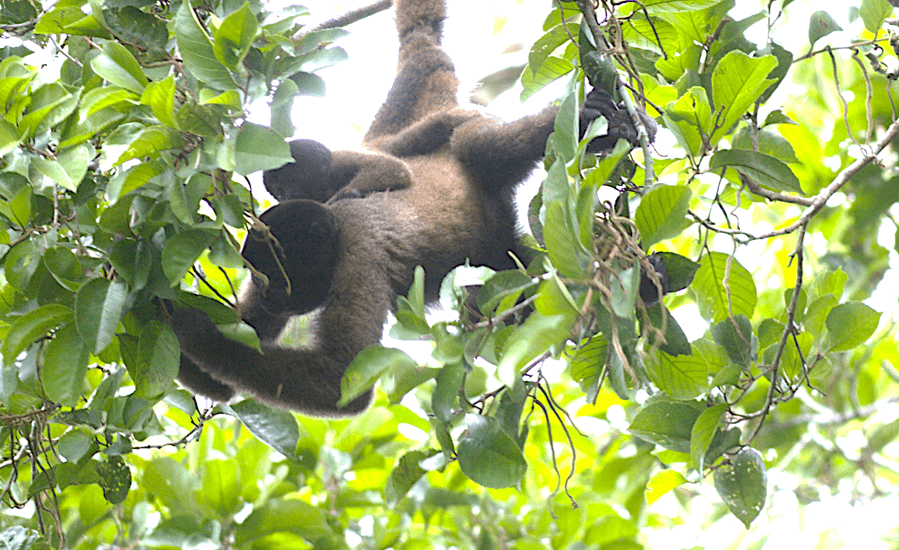 How Do Monkeys Create Tropical Rainforests?