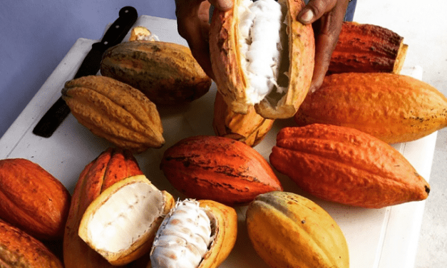 The Resurgence of Brazilian Cacao and Chocolate