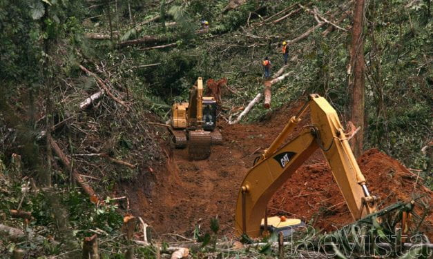 Degreening Panamá