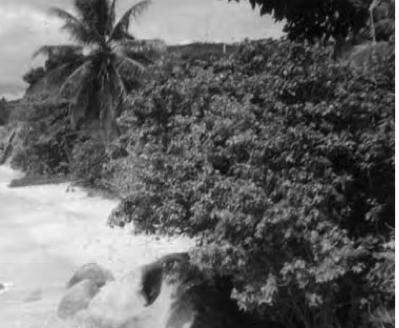 Vieques: an Update