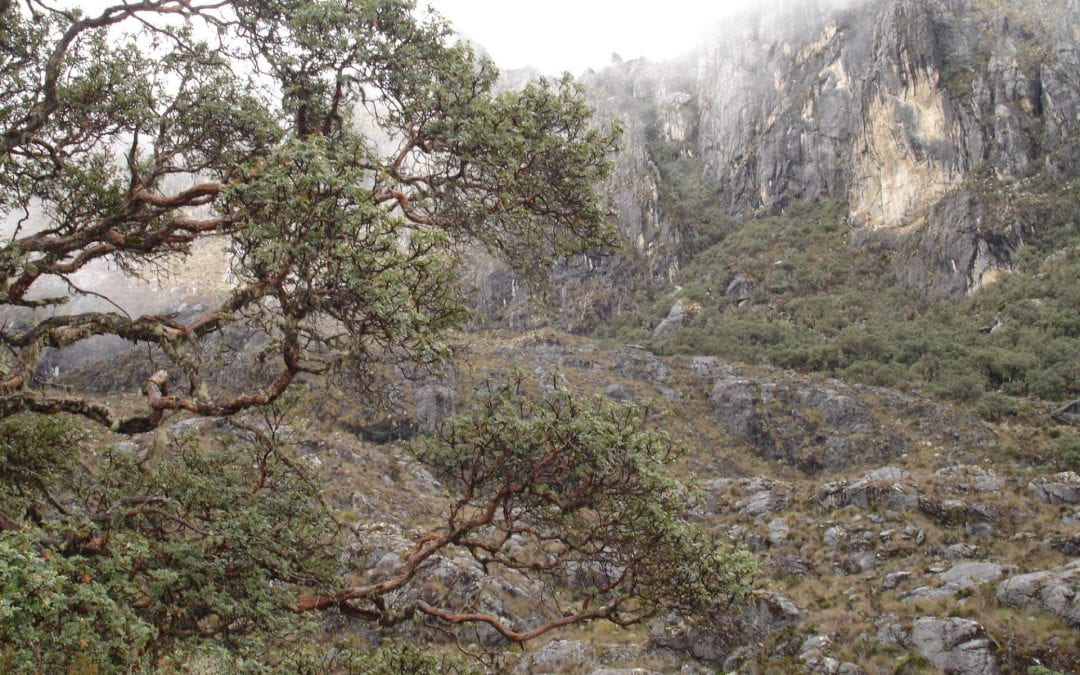 Plants Under Stress in the Tropical High Andes: Learning from Venezuela and Beyond