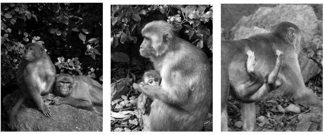 Monkeys and Men