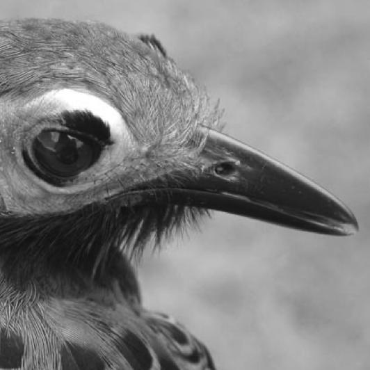 Birding on the Edge of the World