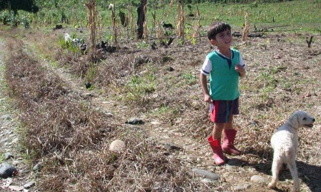 Aerial Spraying and Alternative Development in Plan Colombia