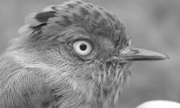 A Survey of Costa Rican Birds