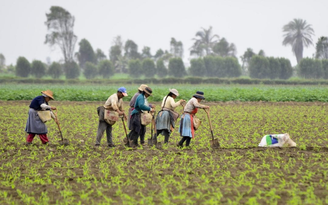 The Neglected Sector: Agriculture in Peru