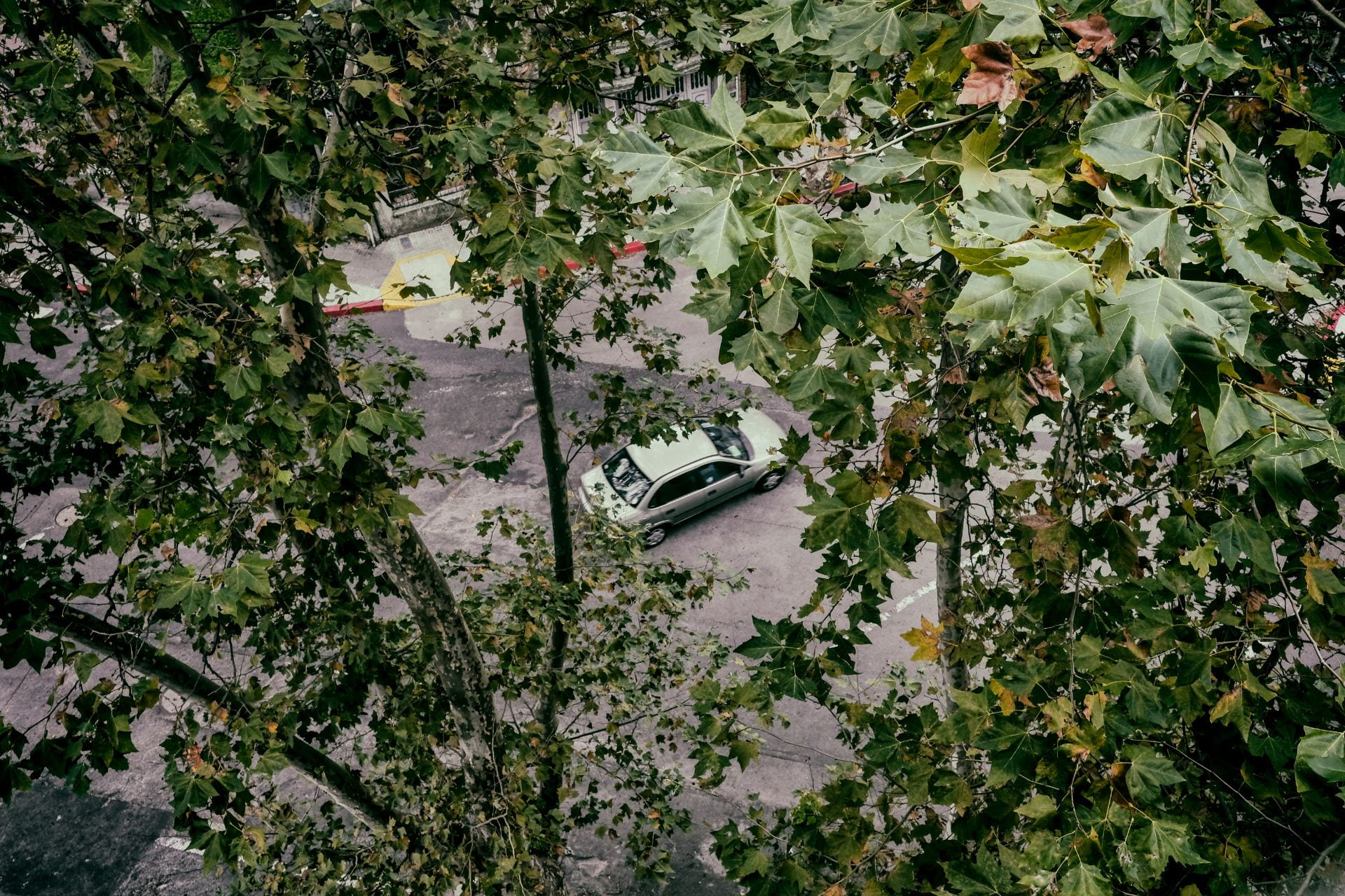 car seen through the trees from above