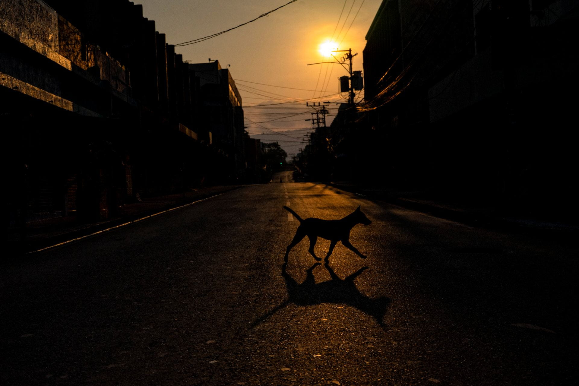 dog in empty street