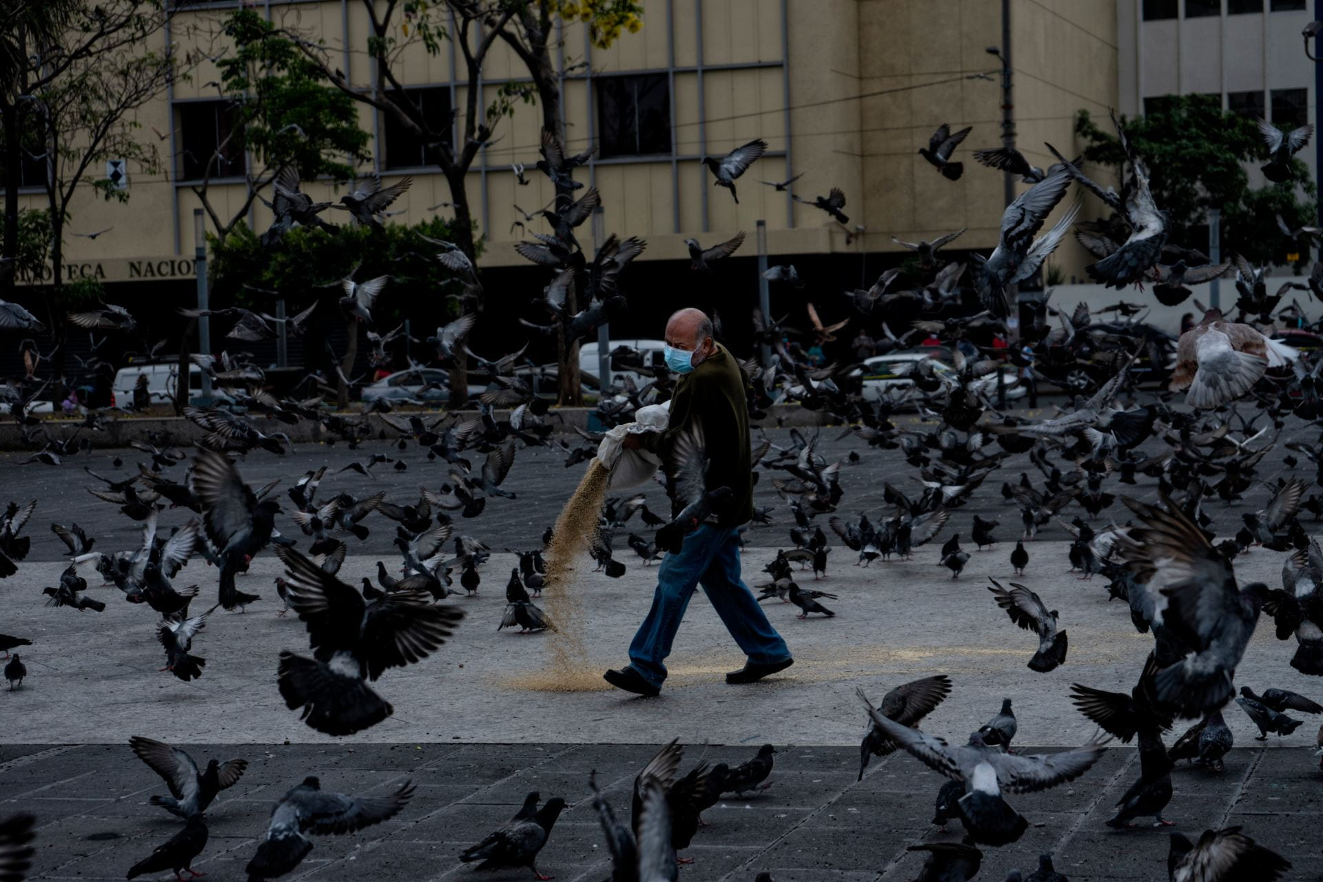 A person feeds the pigeons at Plaza Gerardo Barrios (square) during the COVID pandemic quarantine in the historic downtown San Salvador.