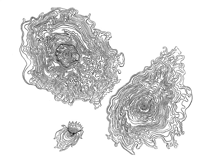 Line drawing of cellular organisms