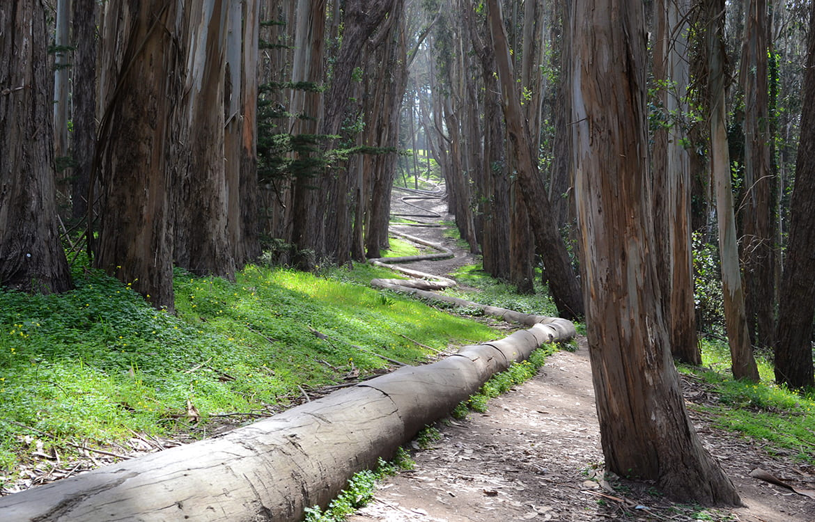 Photo of logs lining a path through the woods