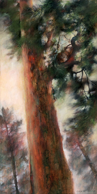 Painting of view looking up a tall pine tree with light shining through its branches