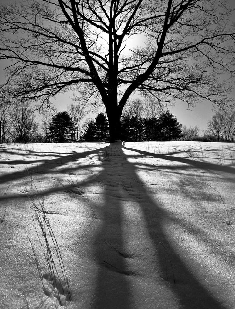 Photo of a tree and its shadow on snow