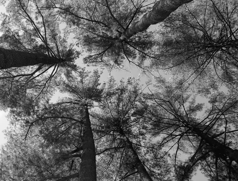 Photo looking up at a ring of treetops