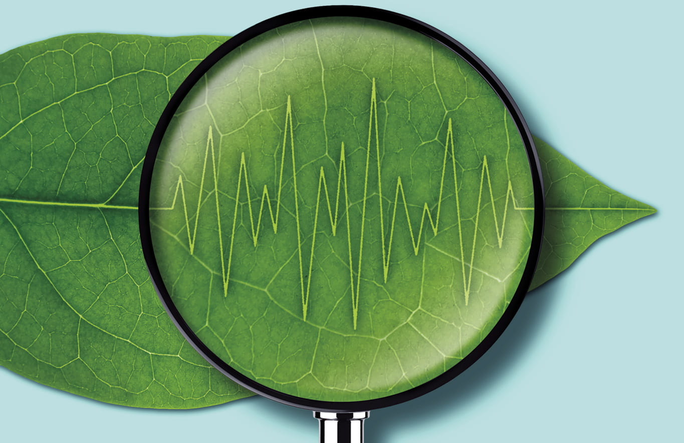 Illustration of magnifying glass over a leaf showing the leaf veins as a line of sound waves