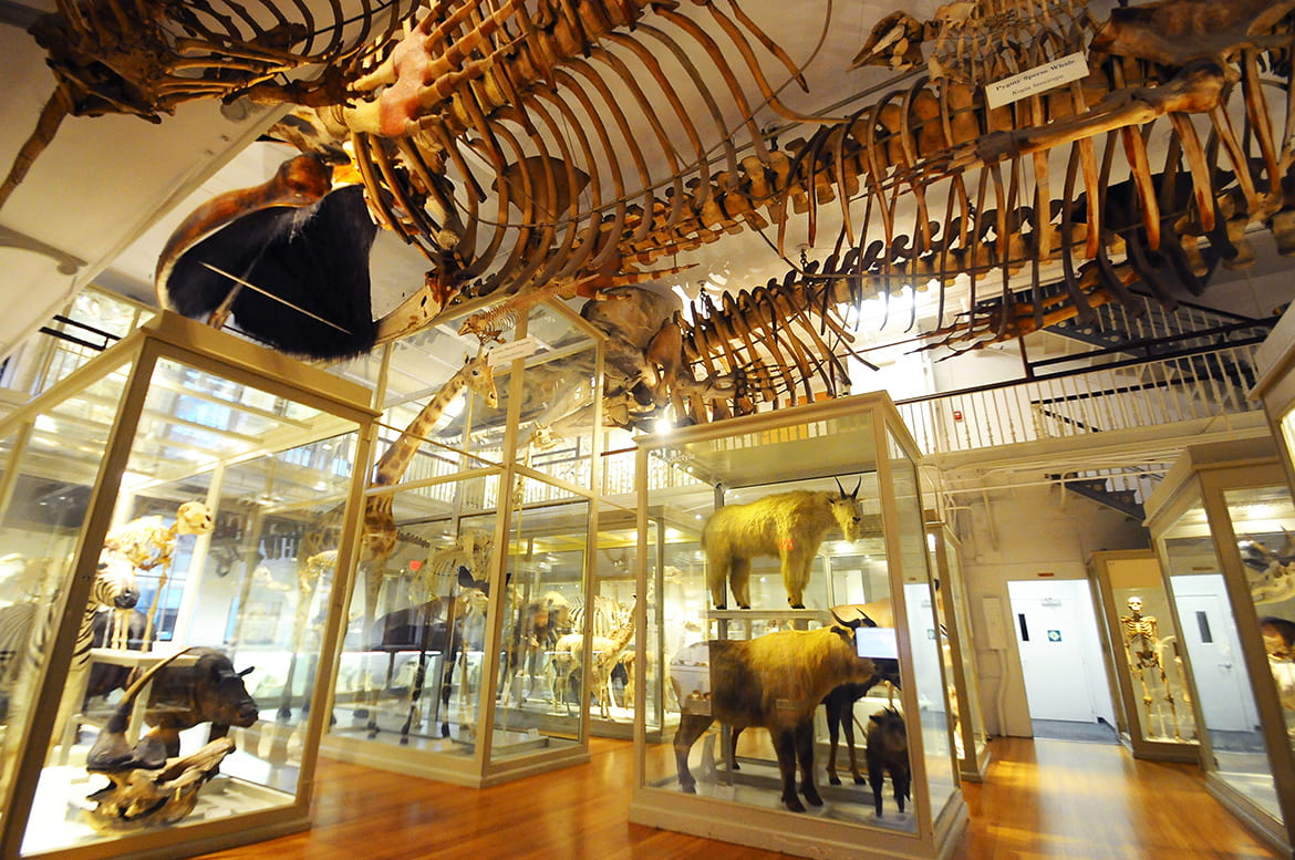 Photo of museum exhibit hall filled with preserved animals in glass cases