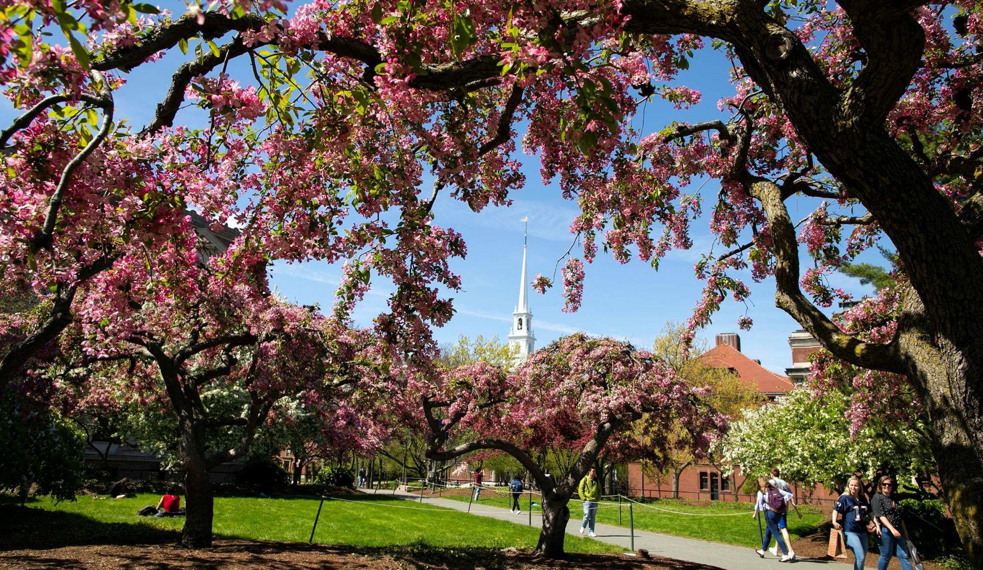 Photo of Harvard Yard