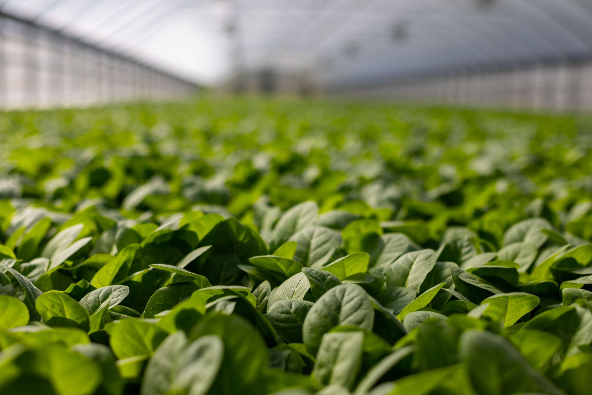 Photo of agriculture in lab