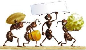 disegno di formiche che lavorano