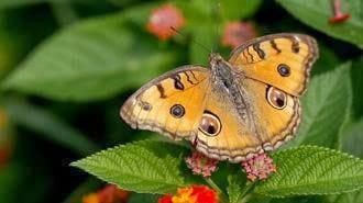 Le farfalle tornano a Milano