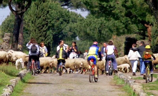 Ciclisti bloccati da gregge di pecore