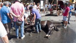 Un cavallo sdraiato per terra soccorso da della gente.