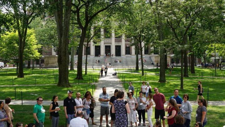 Group of people standing in Harvard yard in summer