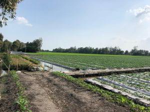 Walton College Vietnam study abroad: crops.
