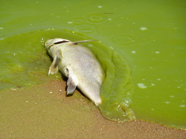 Bipartisan Group of 53 Lawmakers Urge Robust Funding for Harmful Algal Blooms
