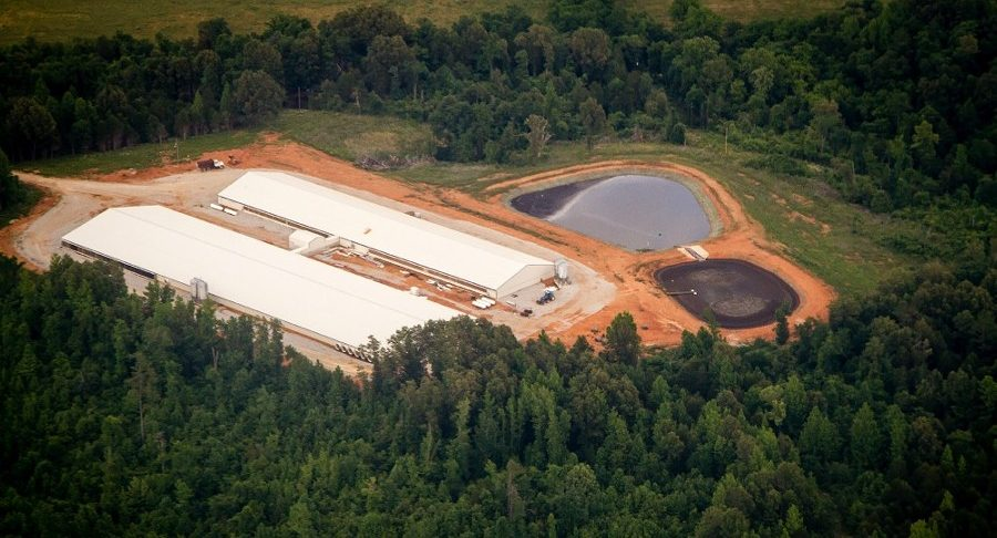 Arkansas Environmental Agency Denies Hog Farm's Permit