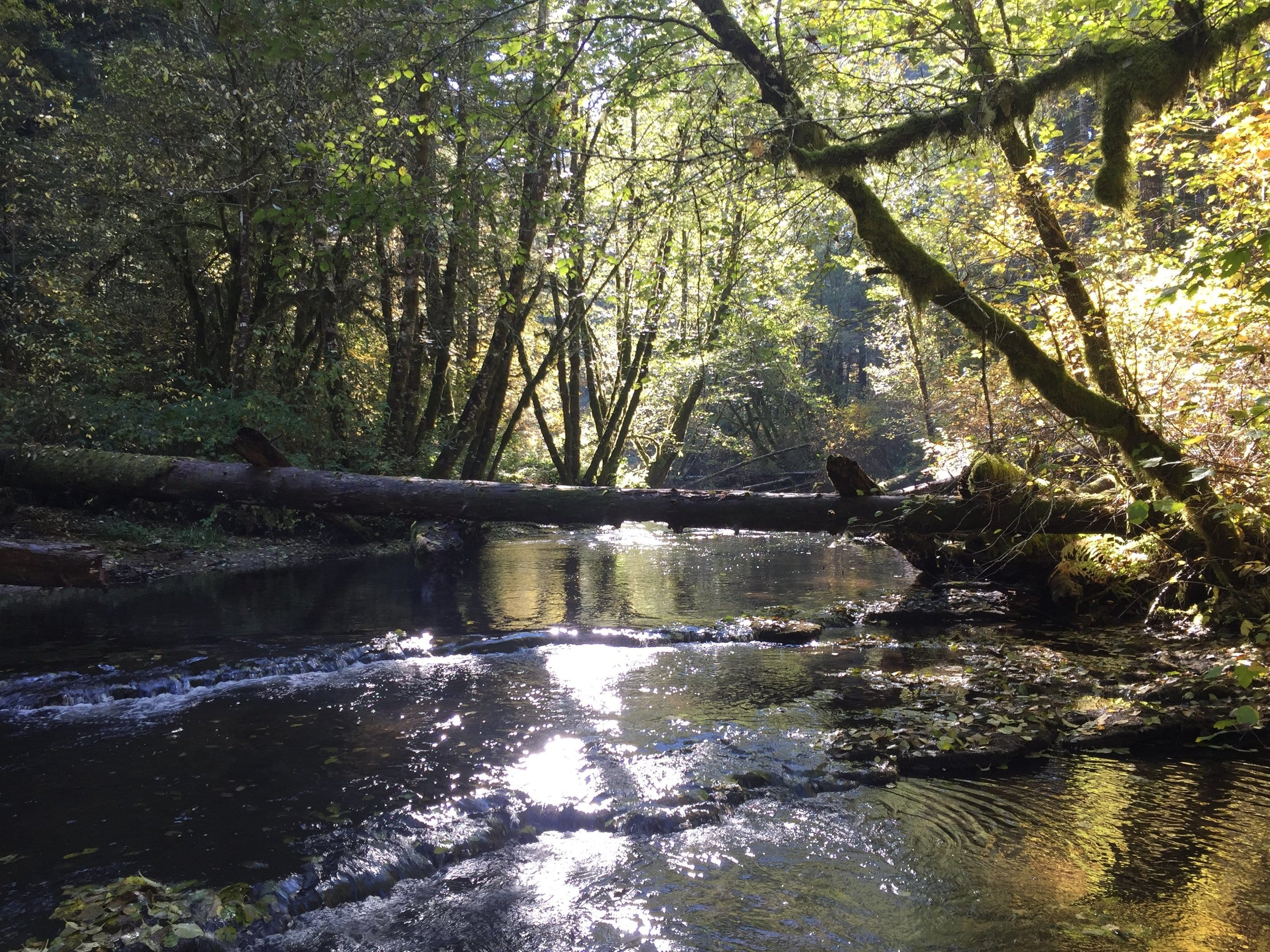 Watershed Groups Have a Positive Impact on Local Water Quality, Study Finds