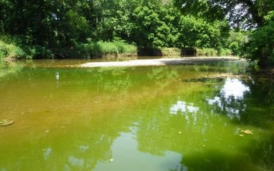 AWRC Publishes Fact Sheet on Algal Blooms in Streams and Ponds