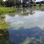 Considerations about Harmful Algal Blooms in Arkansas Ponds