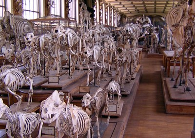 Museum of Comparative Zoology, Paris