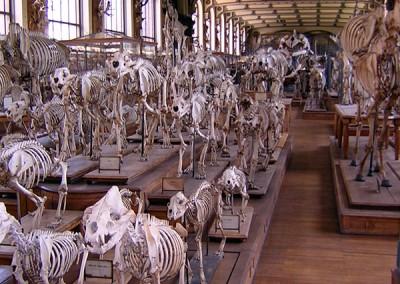 Museum of Comparative Zoology, Paris