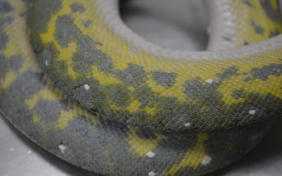 Python Timelapse