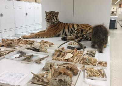 Taxidermy and miscellaneous bones at the Smithsonian National Museum of Natural History
