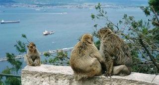 Peculiar Primates: Macaques
