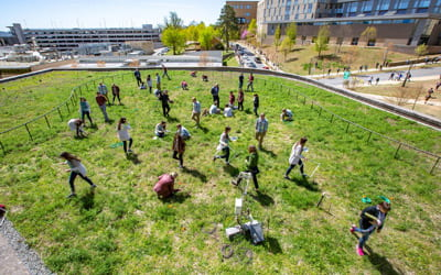 Meet Rufus, Your Friendly Campus Green Roof