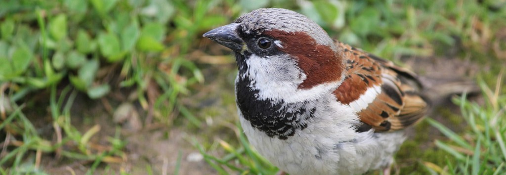 Campus Bird Strike Study Resumes for Spring Migration