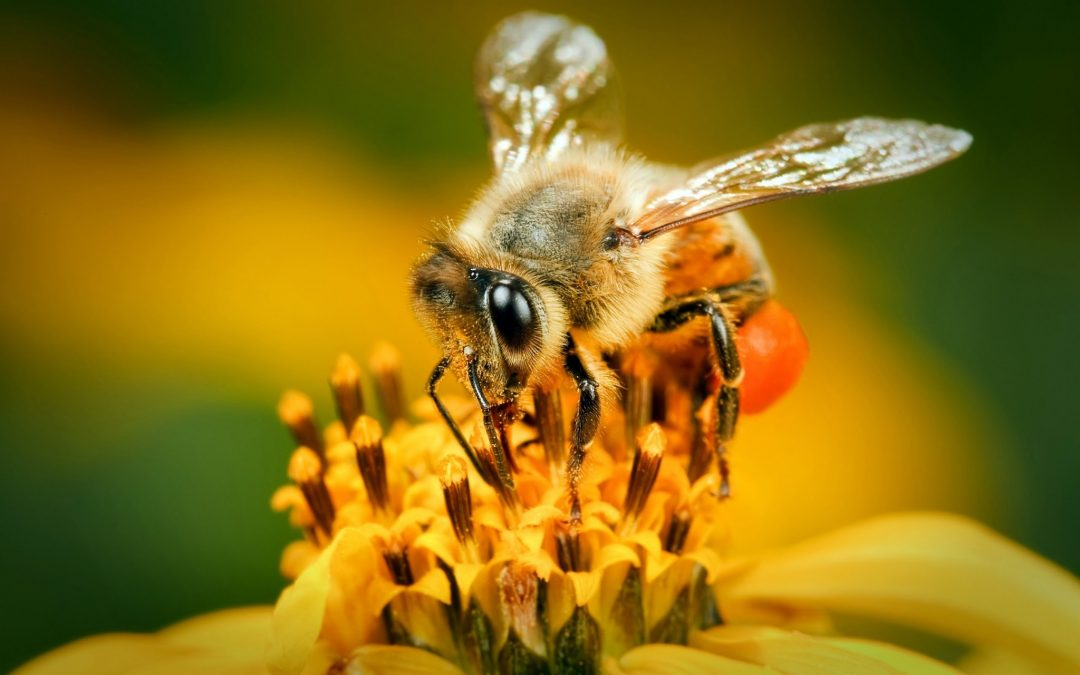 Bees and Their Knees – A Look at these Vital Pollinators