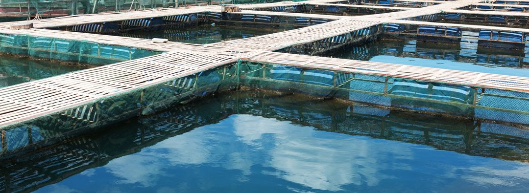 Fish Production and Food Security in a Growing World