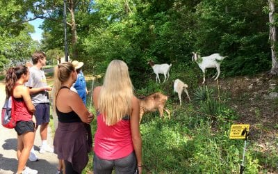 Greedy Goats Pop-Up Petting Zoo Lunch & Learn