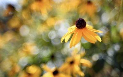 Celebrate Wildflowers This Week