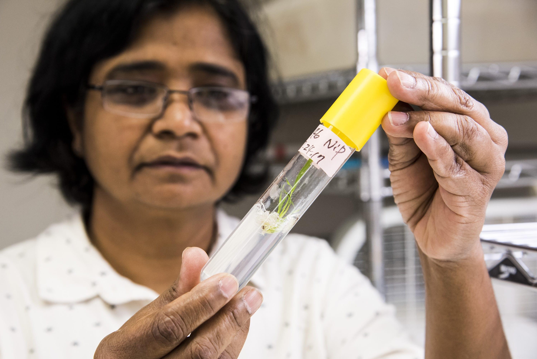 rice-gene-editing