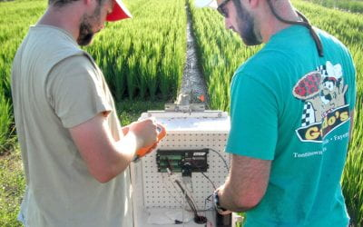 Fertilizer decisions affect methane released from soil