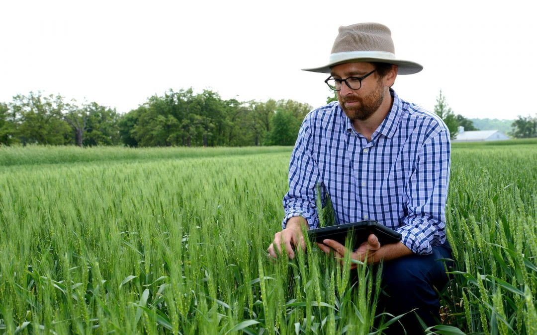 Wheat breeding lines for resistance to disease